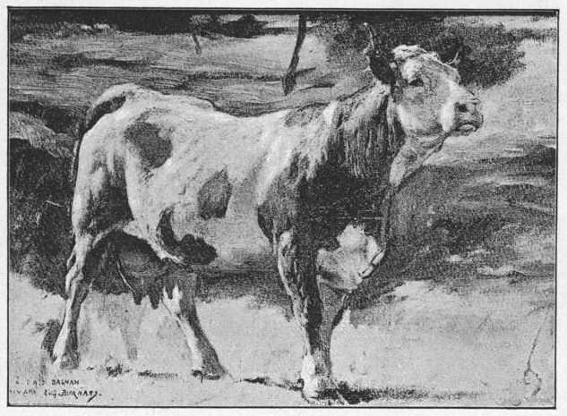 Kuh (studie), 1890 - Eugène Burnand