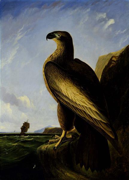 Washington Sea Eagle, 1839 - Джон Джеймс Одюбон