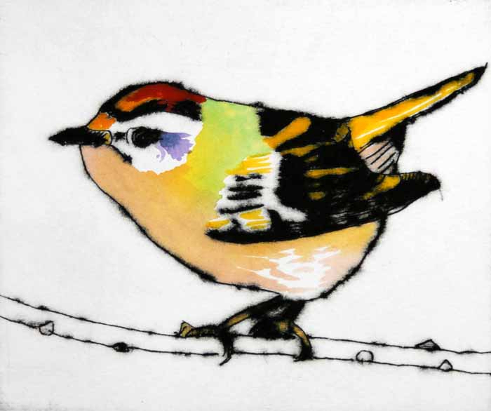 Feisty Firecrest, 2013 - Richard Spare