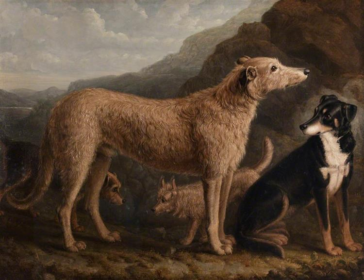 Four Dogs; a Collie from Tweedale, a Scots Deerhound, An Otter Terrier and a Scots Terrier - William Shiels