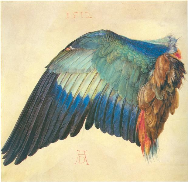 Wing of a Blue Roller, 1512 - Albrecht Durer