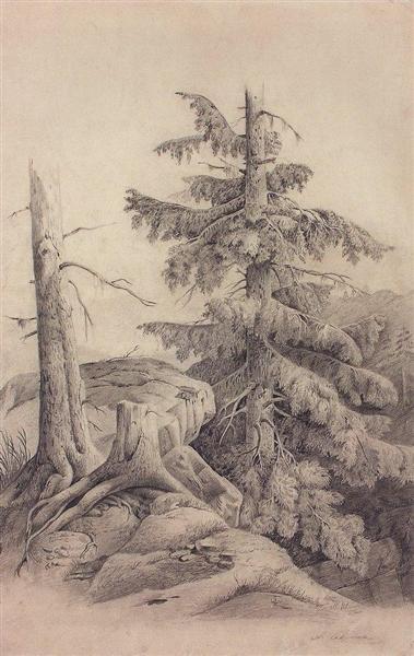 Spruce, c.1850 - Aleksey Savrasov