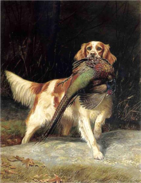 Springer Spaniel with Pheasant, 1900 - Alexander Pope