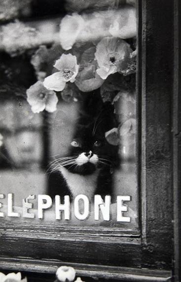 Le Chat du Fleuriste, 1938