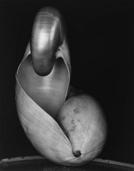 Shell, 1927 - Edward Weston