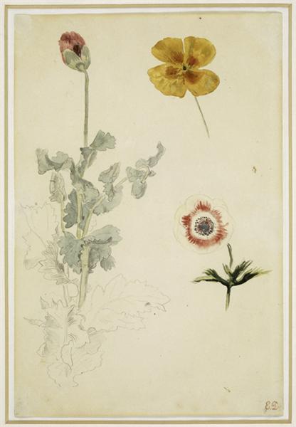 Study of Flowers, 1845 - 1850 - Eugene Delacroix