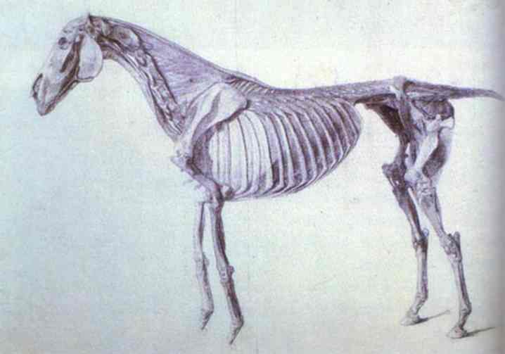 Horse Diagram | Diagram From The Anatomy Of The Horse George Stubbs Wikiart Org