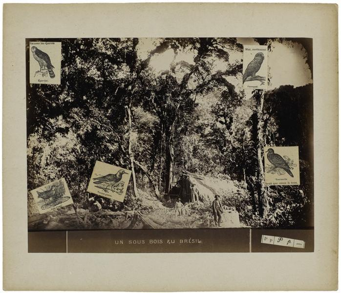 Un sous-bois au Brésil, 1970 - Gherasim Luca