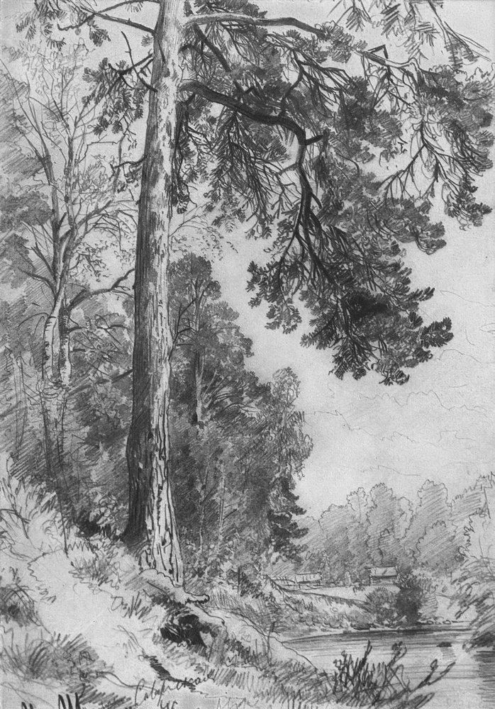 Forest River Siverskaya 1876 Ivan Shishkin Wikiart Org