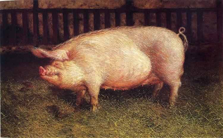 Portrait of Pig, 1970 - Jamie Wyeth