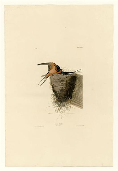 Plate 173 Barn Swallow - John James Audubon