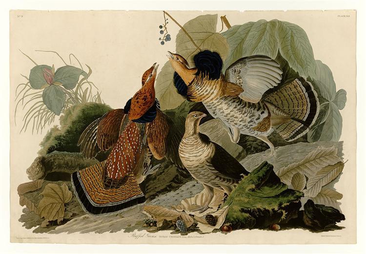 Plate 41. Ruffed Grouse - John James Audubon