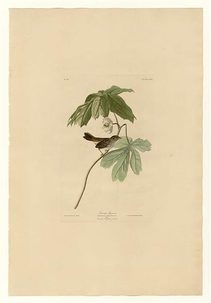 Plate 64 Swamp Sparrow - John James Audubon