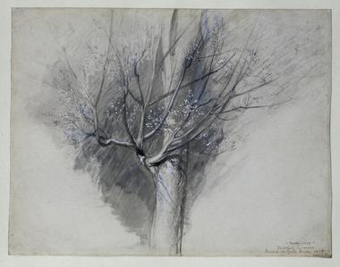 Budding Sycamore, 1875 - John Ruskin
