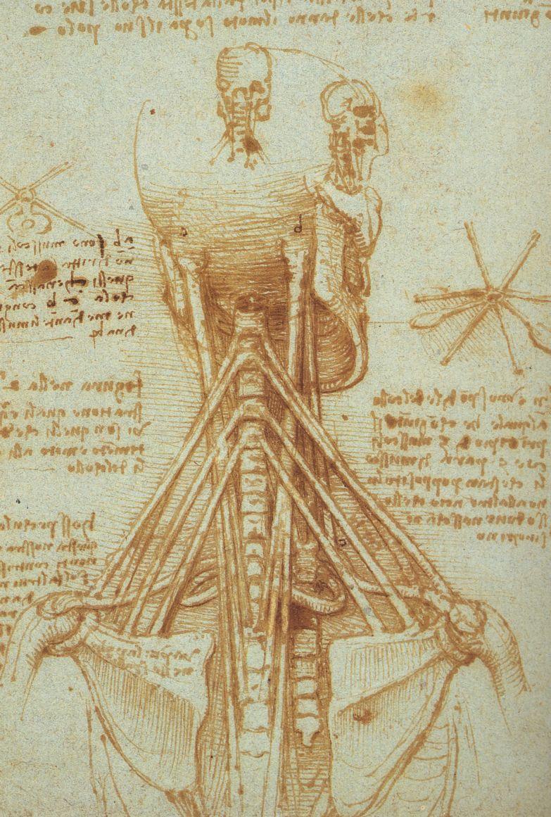 Anatomy of the Neck, 1515 - Leonardo da Vinci - WikiArt.org
