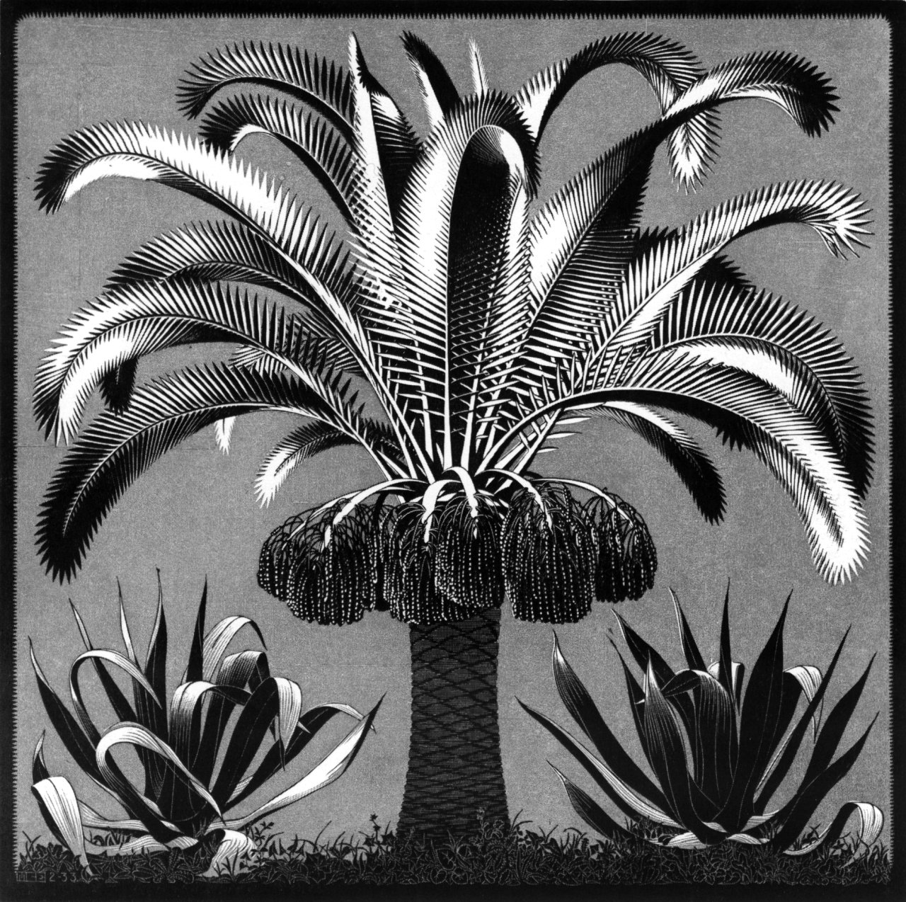 palm 1933 m c escher. Black Bedroom Furniture Sets. Home Design Ideas