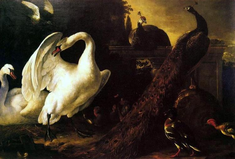 Swans and peacocks - Melchior de Hondecoeter