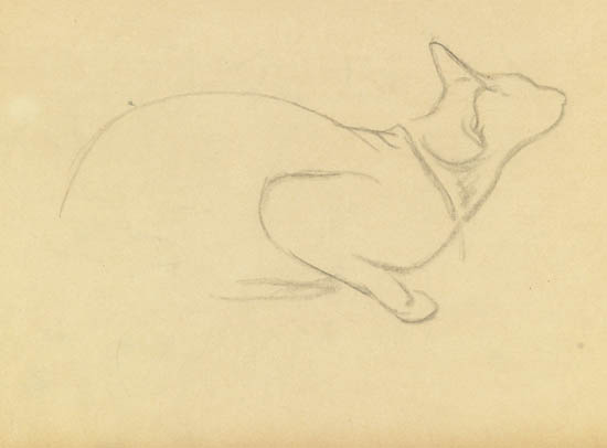 Study of a cat - Theophile Steinlen