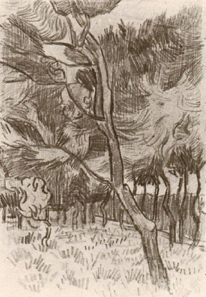 Van Gogh Drawings Trees Pine Trees in the Gard...
